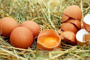 Natürliche Appetitzügler - Eier