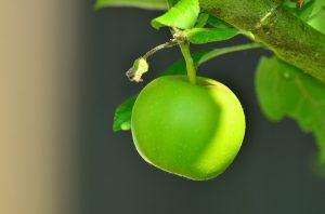 Apfelessig-Diät: Apfel